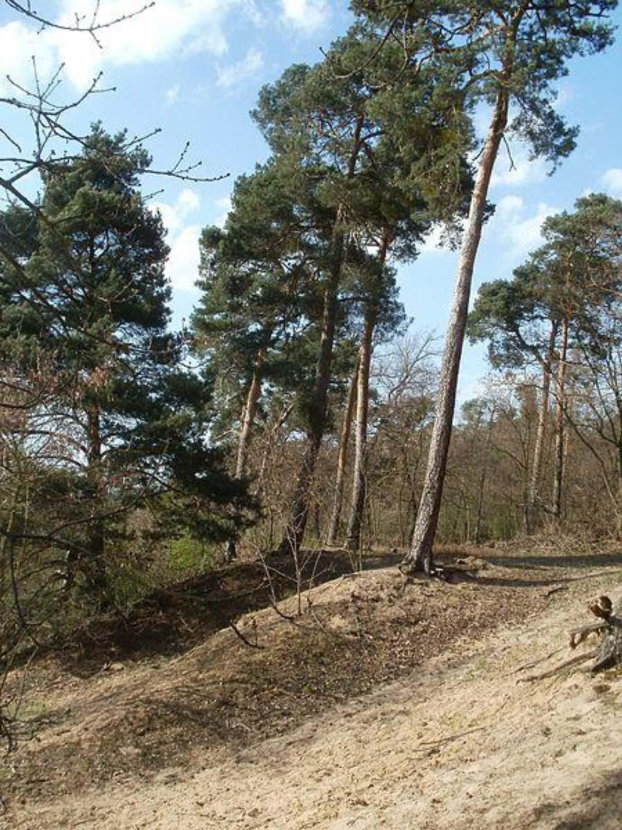 Rheinauer Wald