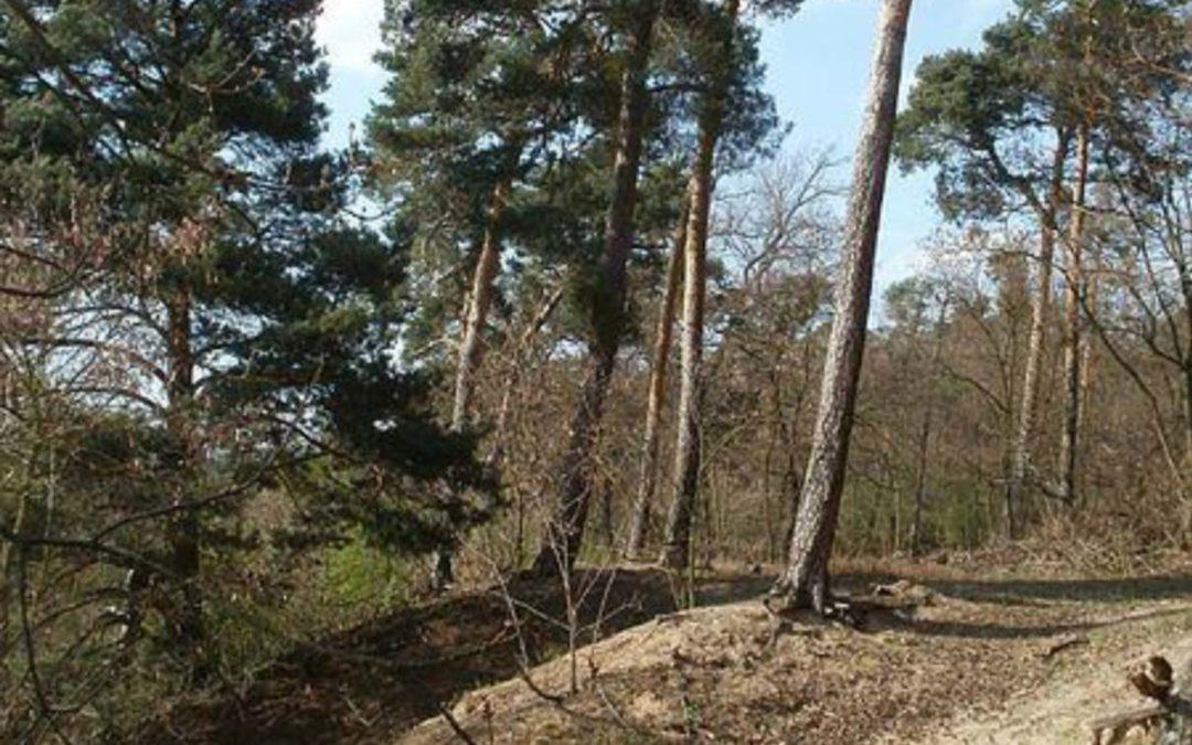 Rheinauer Dossenwald